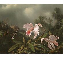 Martin Johnson Heade - Jungle Orchids And Hummingbirds. Still life with flowers: flowers, hummingbird, nest, orchid,  lotus blossom, wonderful flower, forest, passion flowers, garden, magnolias Photographic Print