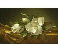 Martin Johnson Heade - Magnolias On Gold Velvet Cloth 1888. Still life with flowers: hummingbird, nest, orchid,  lotus blossom, wonderful flower, forest, passion flowers, garden, magnolias Photographic Print