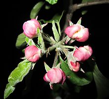 Apple at night by Eleanor11