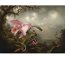 Martin Johnson Heade - Orchid And Hummingbird. Garden landscape: garden view, trees and flowers, blossom,  lotus blossom, botanical park, orchid, wonderful sky, passion flowers, magnolias, hummingbird Photographic Print