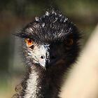 Female Emu  - Wilpenna  Pound - Flinders Ranges by john  Lenagan