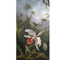 Martin Johnson Heade - Two Hummingbirds Above A White Orchid. Still life with flowers: hummingbird, nest, orchid,  lotus blossom, wonderful flower, forest, passion garden, magnolias Photographic Print