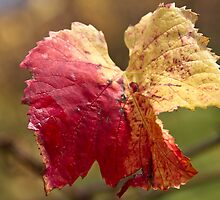 Autumn Vine Leaves by pennyswork
