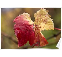 Autumn Vine Leaves Poster
