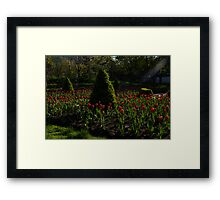 Downtown Victorian Garden - Red Tulips and Sunshine Framed Print