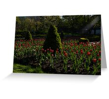 Downtown Victorian Garden - Red Tulips and Sunshine Greeting Card