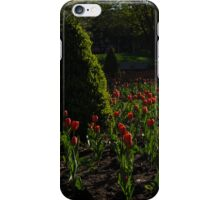 Downtown Victorian Garden - Red Tulips and Sunshine iPhone Case/Skin