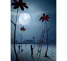 O Espaço das Flores Photographic Print
