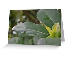 Leaves After Rain Greeting Card