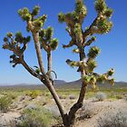 Joshua  Tree by Loisb