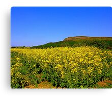 In The Shadow Of Benevenagh Canvas Print