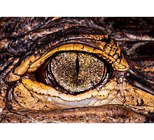 American Alligator, closer & in color Photographic Print
