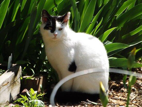 Cat Portrait, Brunswick Community Garden, Jersey City, New Jersey  by lenspiro