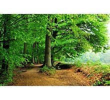 Walking in the May forest on a rainy day Photographic Print