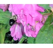 bumble bee Photographic Print