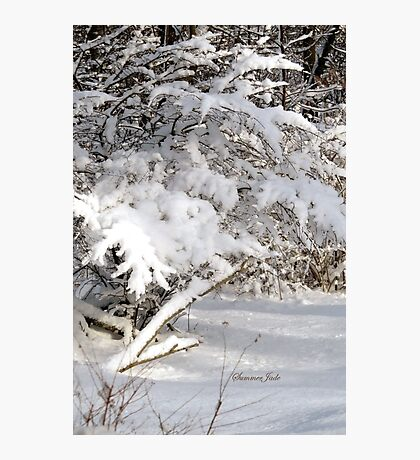 Mother Nature Wears a Bridal Gown... Photographic Print