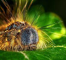 Tent Caterpillar by Patrick Kavanagh
