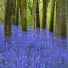 Bluebell Sea by SWEEPER