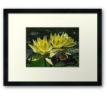 Three Lillies Framed Print