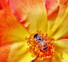 La Bee en Rose by Martha Sherman