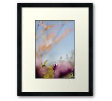 Tranquil lavender Framed Print