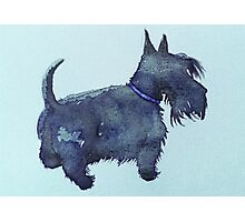 Scottie watercolour (blue) Photographic Print