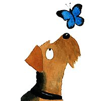 Airedale Dog & Butterfly Photographic Print