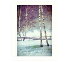 Two birches Art Print