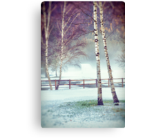 Two birches Canvas Print
