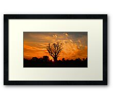 Tranquil Sunset Boab - Panorama Framed Print