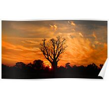 Tranquil Sunset Boab - Panorama Poster