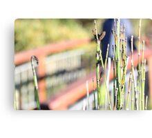 Grass Reeds Canvas Print