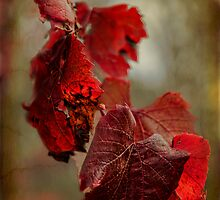 Autumn's End by Elaine Teague