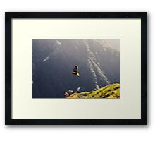 World's only alpine parrot Framed Print