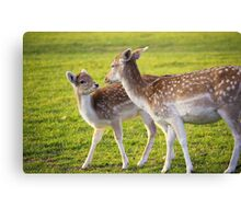 Deers - Mother and child  Canvas Print