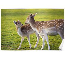 Deers - Mother and child  Poster