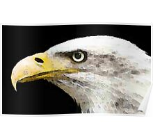 Bald Eagle by Sharon Cummings Poster