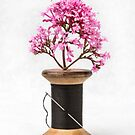 Wooden Vase by Dave Hare