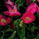 Pop-Pop-Poppy by Charles & Patricia   Harkins ~ Picture Oregon