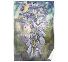 Drops of Wisteria Poster