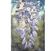 Drops of Wisteria Photographic Print