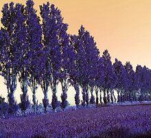 Purple alley by Anivad - Davina Nicholas