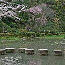 Garden Pond by phil decocco
