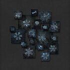 Snowflake collage - Dark crystals 2012-2014 by Alexey Kljatov