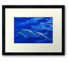 Striped Dolphins of the Caribbean Island of Dominica (2) Framed Print