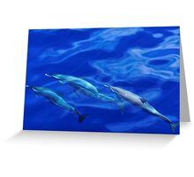 Striped Dolphins of the Caribbean Island of Dominica (2) Greeting Card