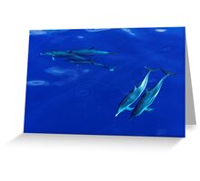 Striped Dolphins of the Caribbean Island of Dominica Greeting Card