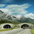 Banff's Wildlife Overpass by Dyle Warren