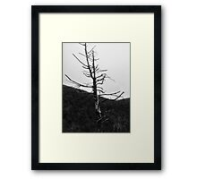 Tree No. 1 Framed Print