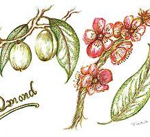 Almonds by Teresa White